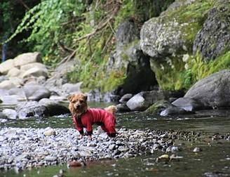 初代犬の時からお願いしていました。 しつけ、訓練のコツなどを分かりやすく丁寧に教えていただけて、訓練の日は飼い主も犬と一緒に楽しみにしていました。 あの時教えていただいたことは後々まで役に立ち、今の楽しいドッグライフにつながっています。先生は私のバイブルです。